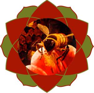 Les Nectarsde Plantes BIO