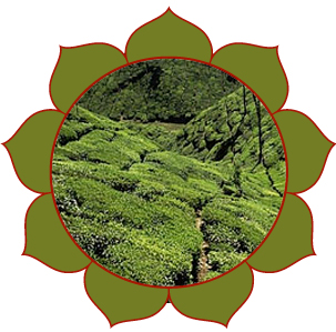 Nilgiri hauts plateaux